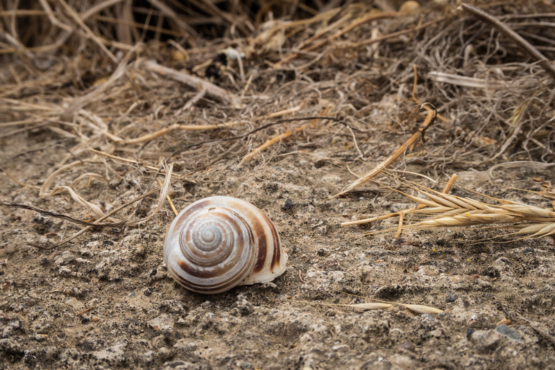 Bronze and white snail