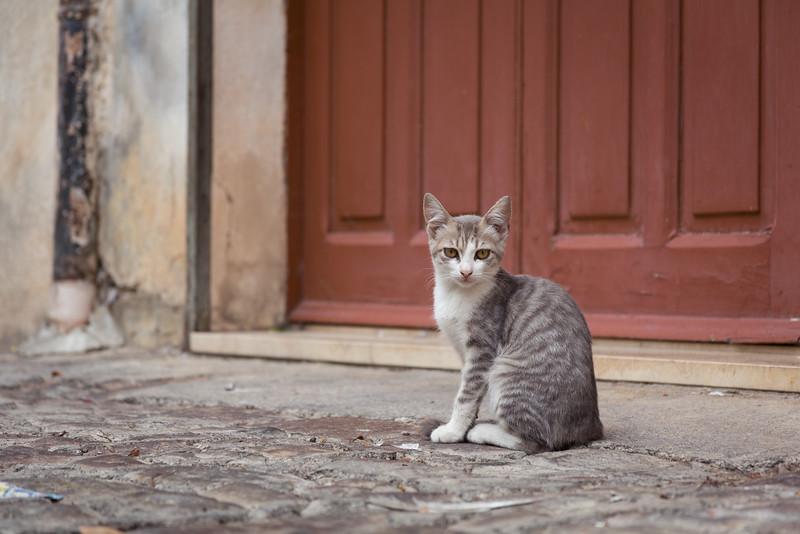 Closeup kitten