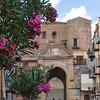 Nerium Oleander in Castelbueno