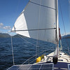 Our 130 genoa poled out to port on a downwind run.