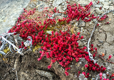 Small red flowers.
