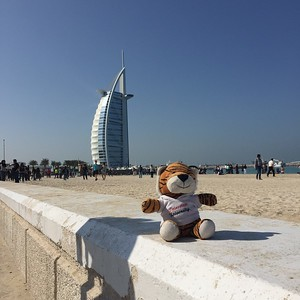 PJ the Tiger in Dubai - Bridget St. Clair