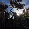 MET 110516 TREE SILHOUETTE