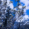 blooms Mountain background Sundance Utah