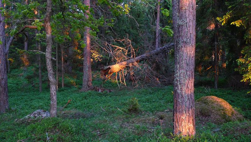 En ljusglimt i skogen.