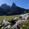 parco naturale adamello brenta,  bivacco malga spora, edelweiss