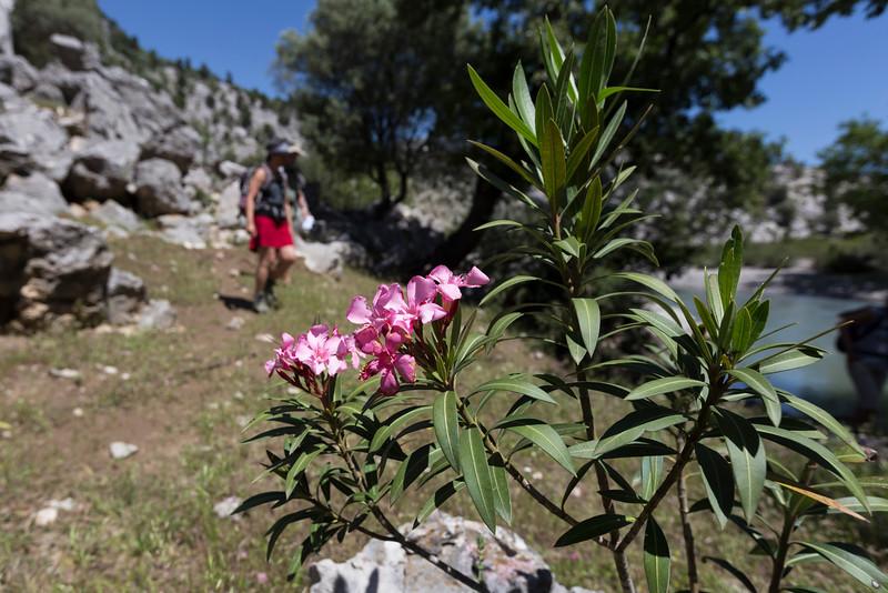 st paul trail, degirmenözü - caltepe <br /> oleander
