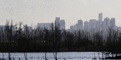 ackerdijk, rotterdam