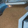Webster Wheat Harvest 2016-30