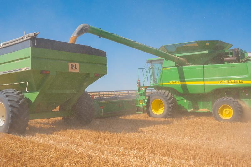 Webster Wheat Harvest 2016-10