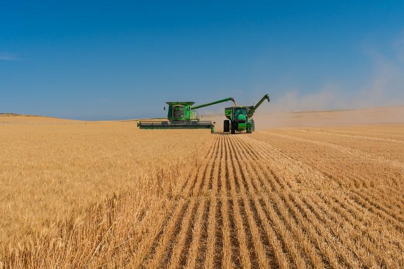 Webster Wheat Harvest 2016-11