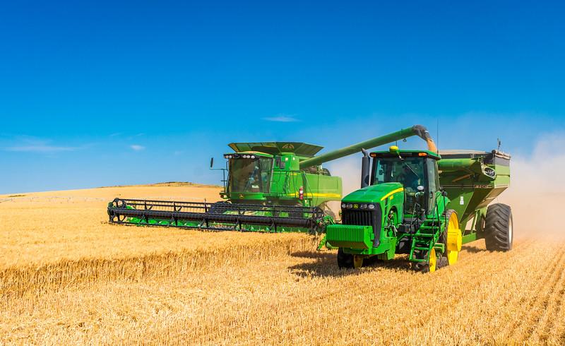 Webster Wheat Harvest 2016-7