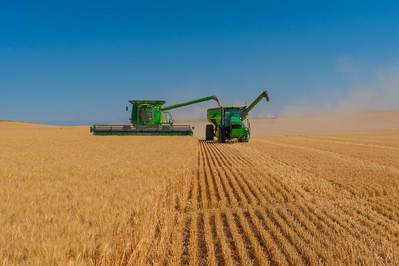 Webster Wheat Harvest 2016-12