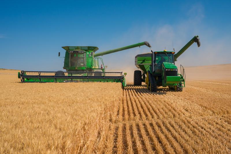 Webster Wheat Harvest 2016-14