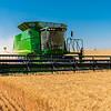 Webster Wheat Harvest 2016-35