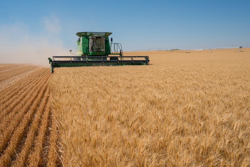 Webster Wheat Harvest 2016-2