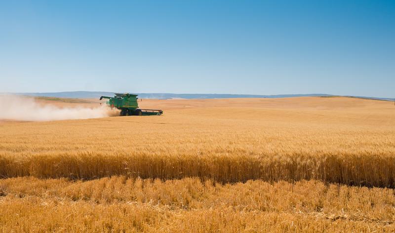 Webster Wheat Harvest 2016-5