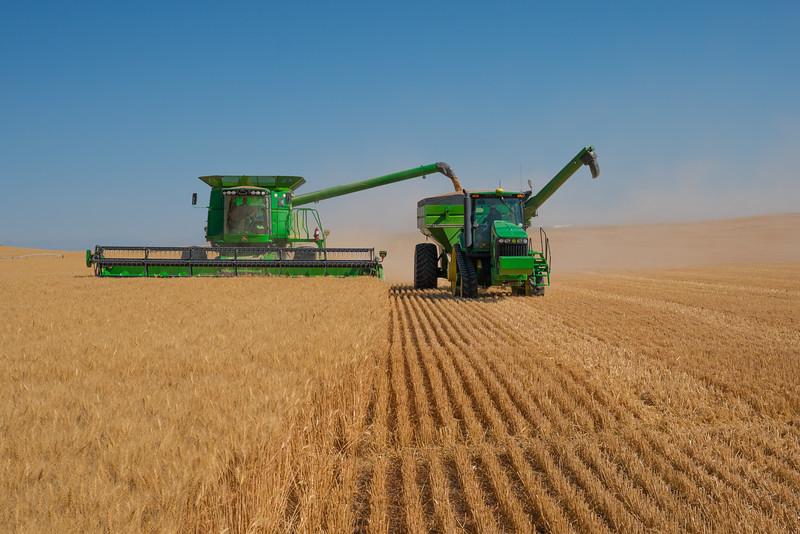 Webster Wheat Harvest 2016-13