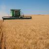 Webster Wheat Harvest 2016-34