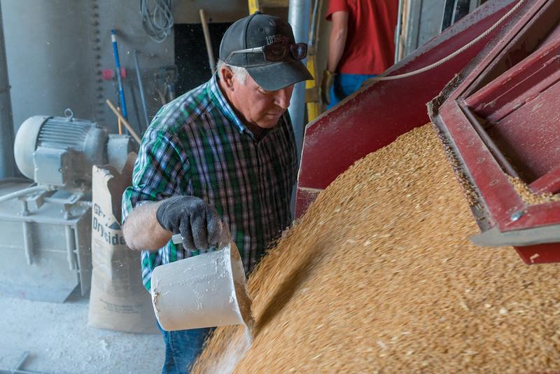 Webster Wheat Harvest 2016-38