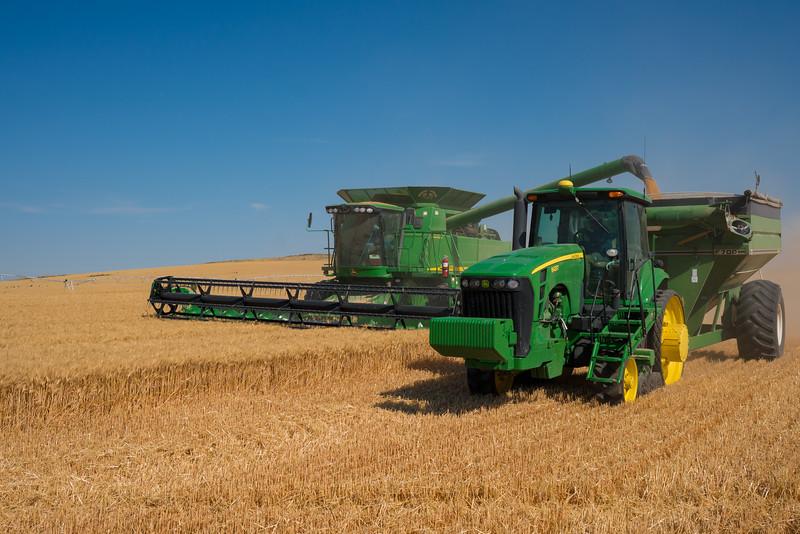 Webster Wheat Harvest 2016-8