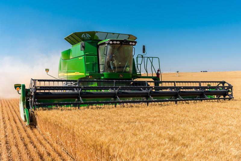 Webster Wheat Harvest 2016-3