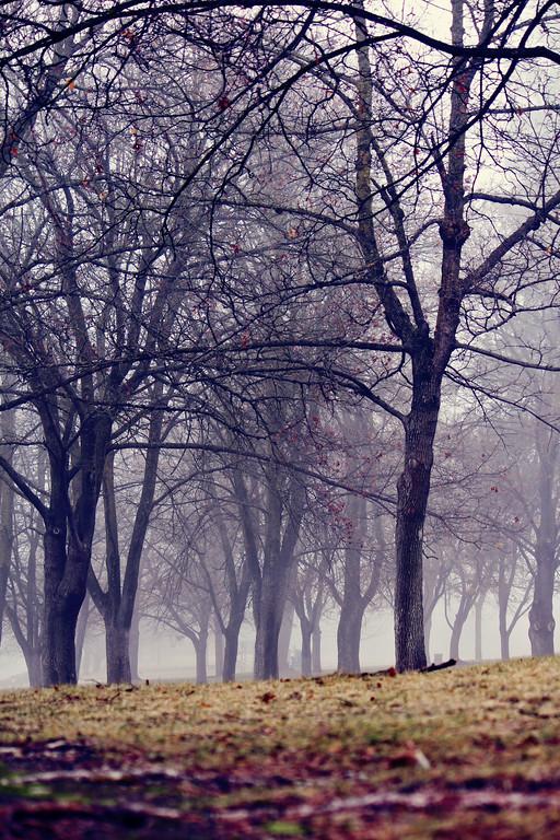 Foggy Day...