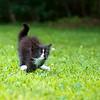 Running Kitty