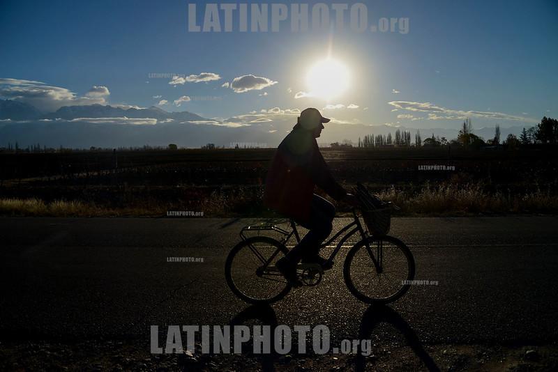 Argentina : ciclista en Mendoza / Argentinien : Radfahrer in Mendoza © Augusto Famulari/LATINPHOTO.org