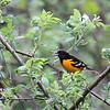 Yellow Bird