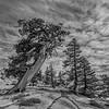 Sierra Landscape 3