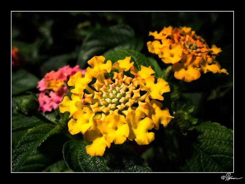 P5280638_Botanix