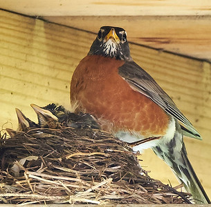 16-05-18 robin and young