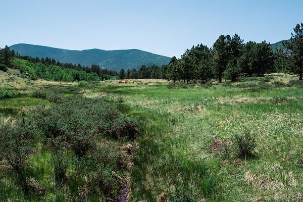 Cattle Near a Creek