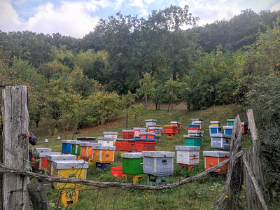 Beekeepers in the town of Donji Milanovac, Serbia.