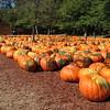 Fall Pumpkin Festival in Elijay Ga.