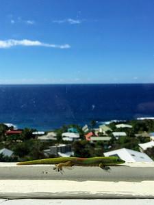 A gecko enjoys the view in Kona Kai Paradise, Hawaii