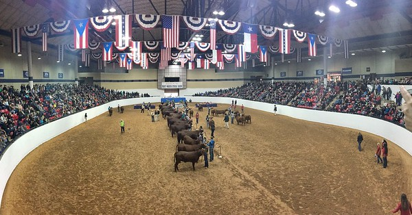 The Show Ring