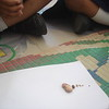 BUILDING NUMERACY SKILLS - ASCENDING SIZE WITH SEEDS (1)