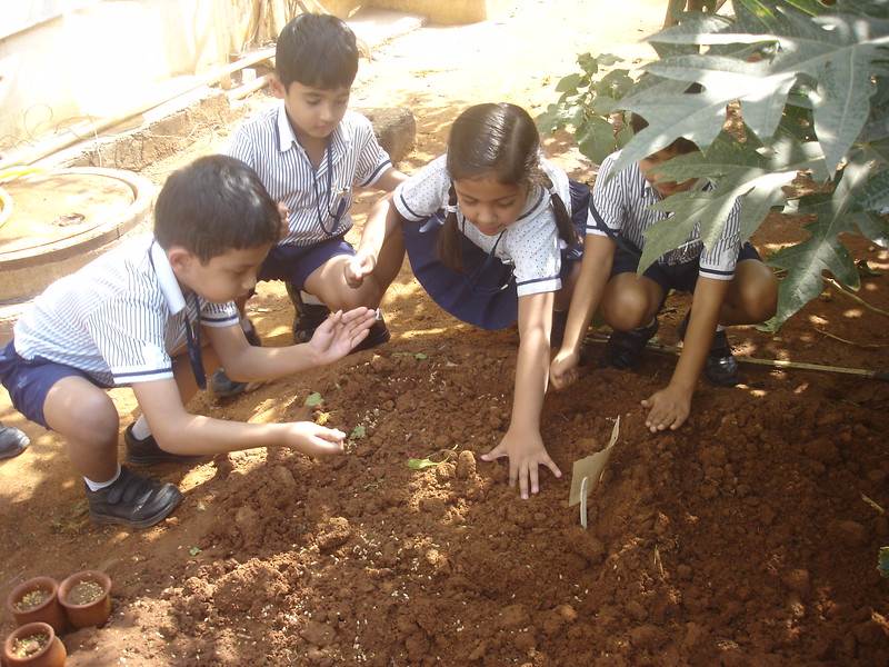 EXPERIENTIAL LEARNING - SOWING SEEDS DURING THE TOPIC, THE MAGICAL SEED