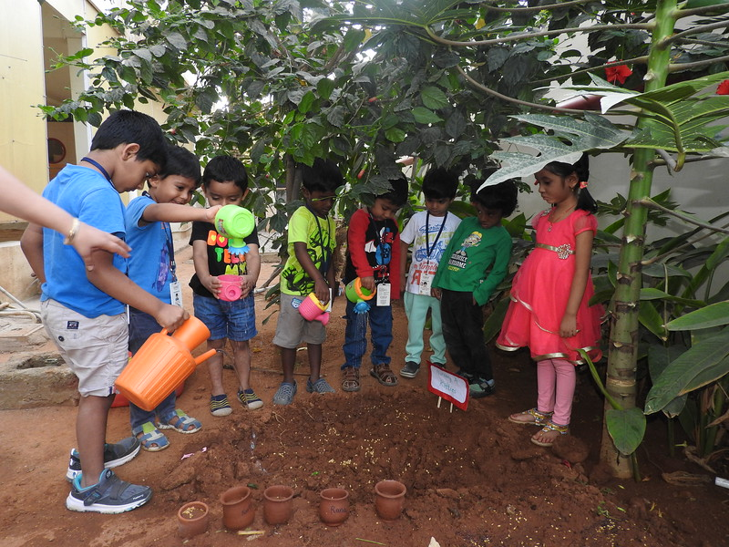 SOWING THE SEEDS ACTIVITY (1)