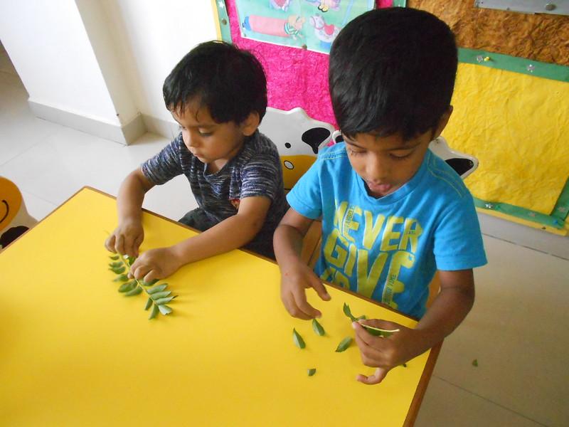 MOOMOOS PLUCKING LEAVES (1)