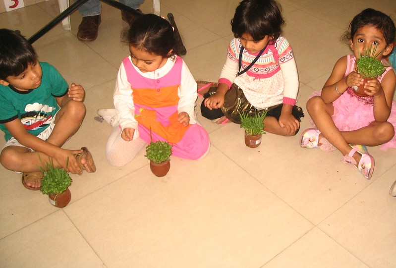 OBSERVING THE PLANTS GROWN BY THEMSELVES (2)