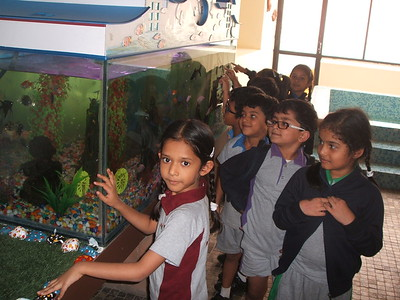 DEVELOPING OBSERVING  SKILLS DURING THE TOPIC WATER KINGDOM - AQUARIUM