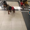 DEVELOPING PHYSICAL AND GROSS MOTOR SKILLS-  CRAWLING DURING <br /> P E T CLASS