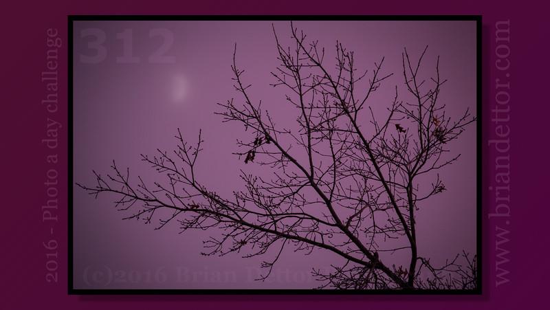 Day #312 - Purple Haze