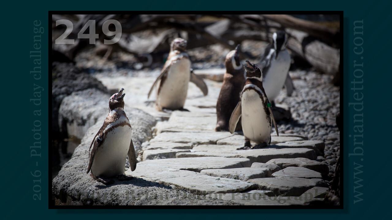 Day #249 - Penguin Island