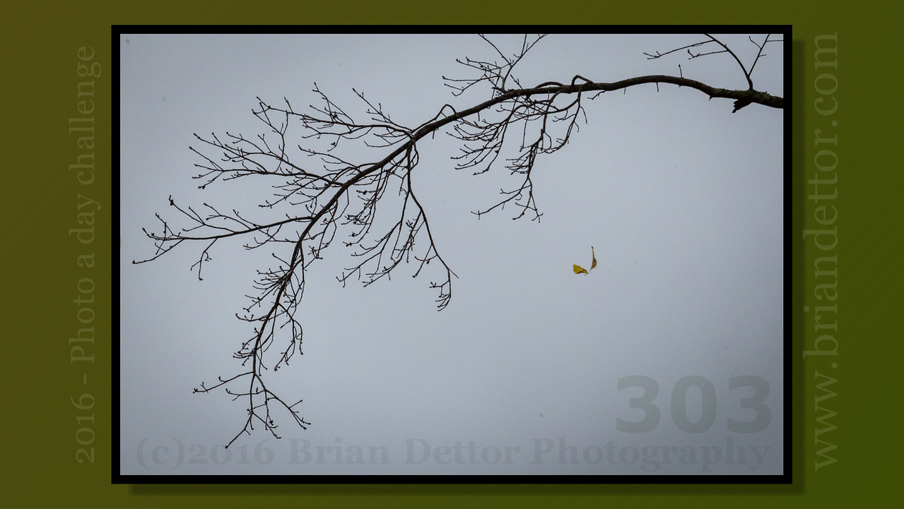 Day #303 - Falling Leaf