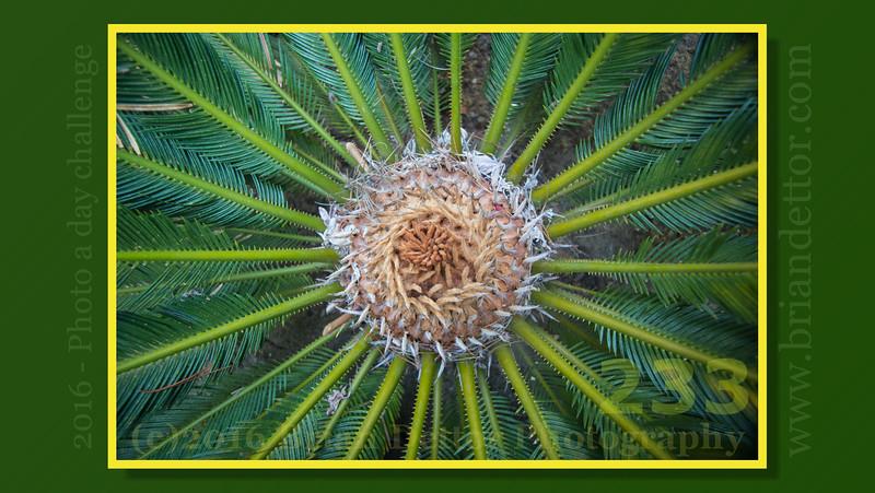 Day #233 - Palm  (Virginia Markham Davenport '51 Botanical Gardens)