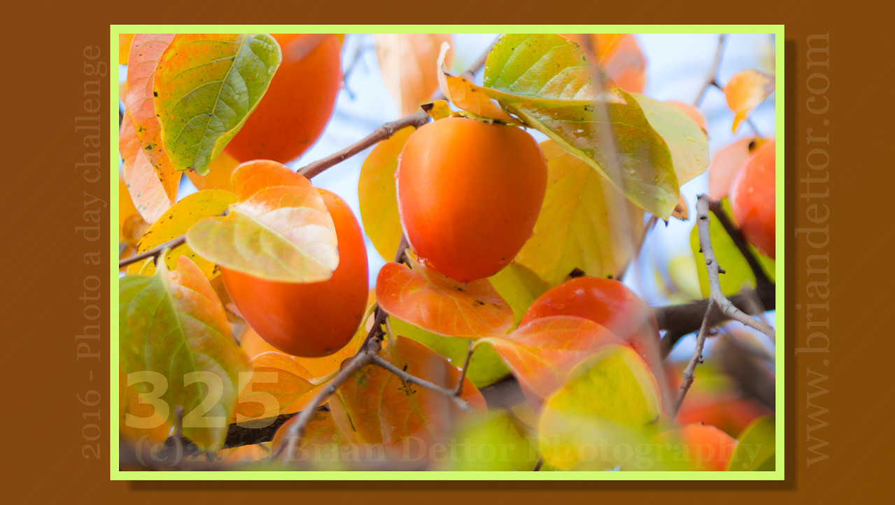 Day #325 - Persimmons
